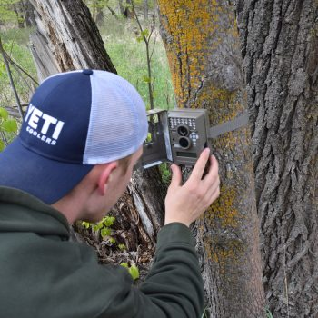 5 Questions to Help You Choose the Best Trail Camera