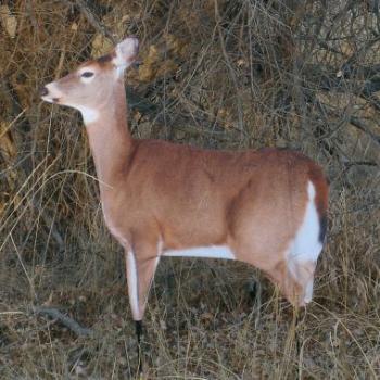 cheap deer decoy doe