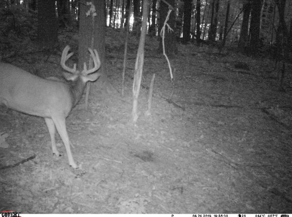trail camera review mp8