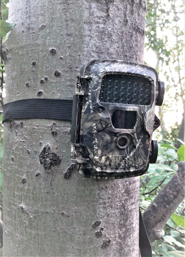 best trail camera for new hunters