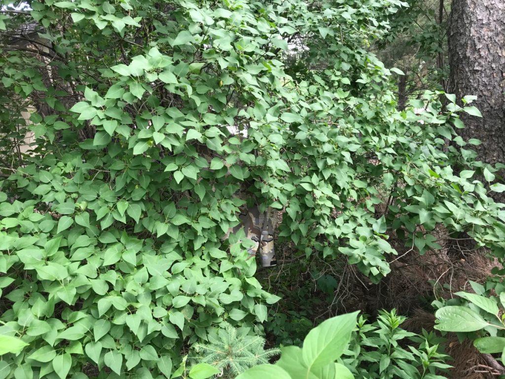 KUIU Valo in greenery test