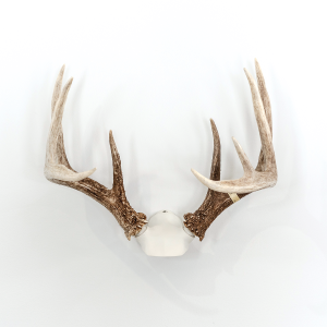 best way to display shed antlers