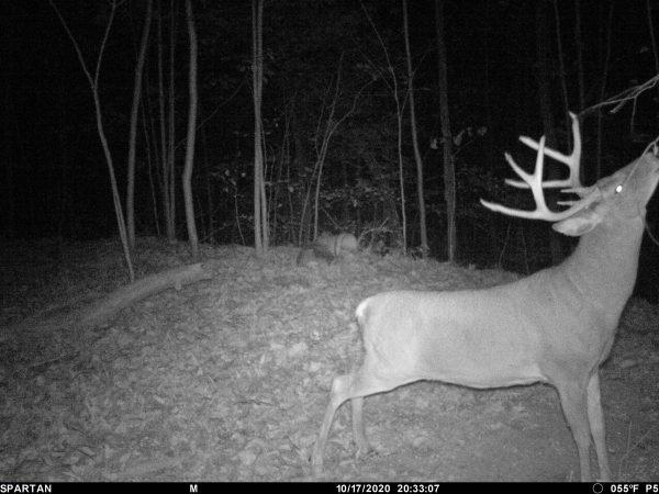 best way to kill a mature buck